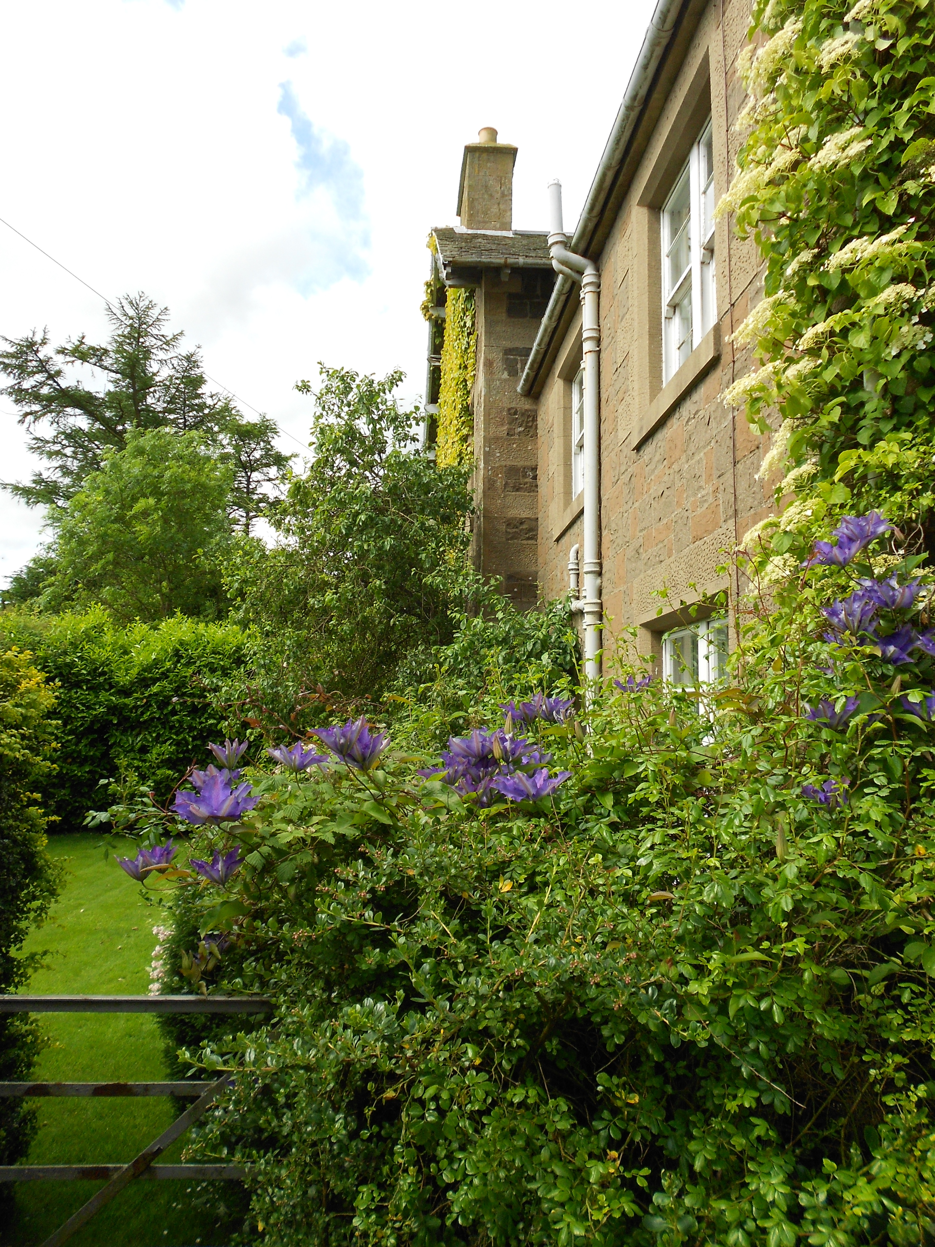 Clematis President 2014 June18 Downfield 015 – Downfield House ...