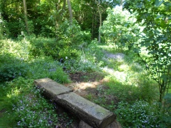 Downfield garden 13 June 2013 066